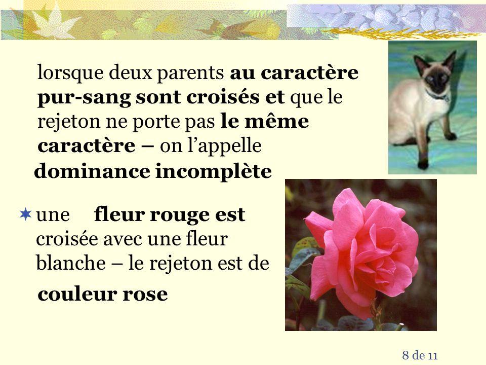 une croisée avec une fleur blanche – le rejeton est de fleur rouge est