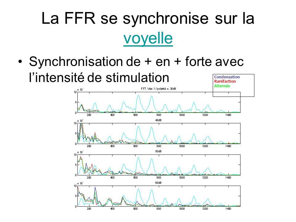 La FFR se synchronise sur la voyelle