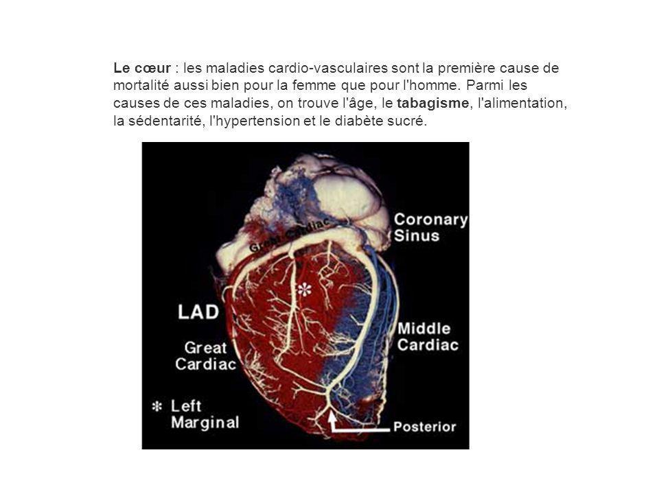 Le cœur : les maladies cardio-vasculaires sont la première cause de mortalité aussi bien pour la femme que pour l homme.