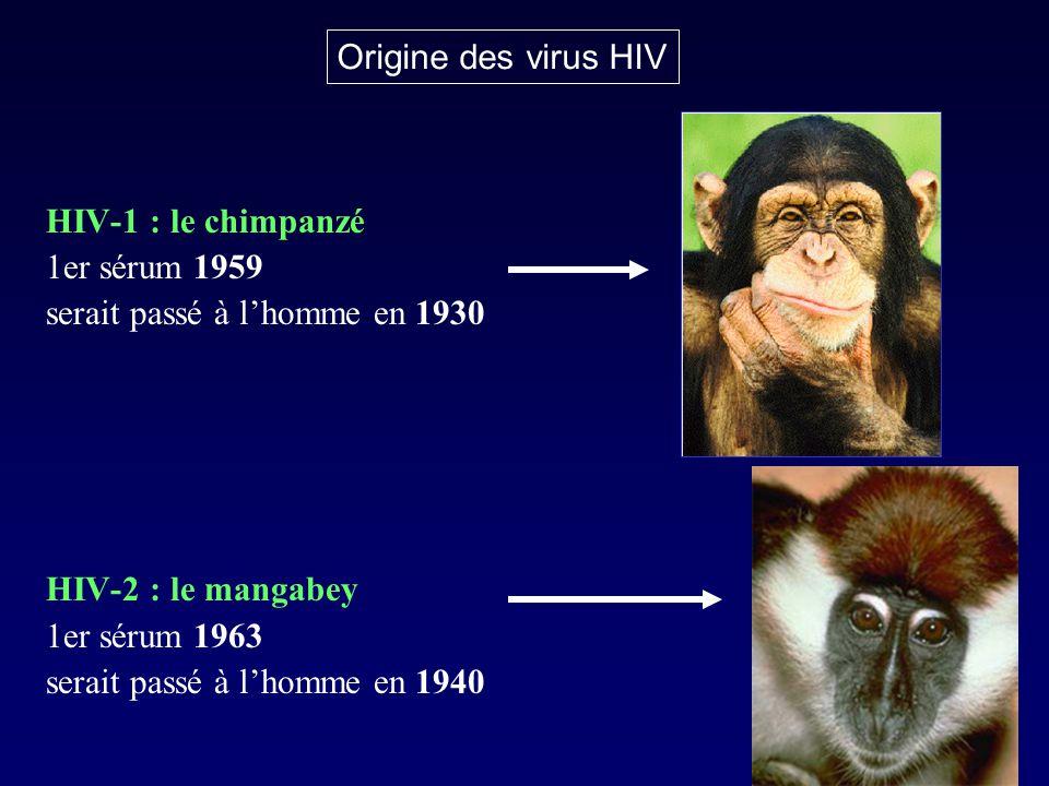Origine des virus HIV HIV-1 : le chimpanzé. 1er sérum 1959. serait passé à l'homme en 1930. HIV-2 : le mangabey.