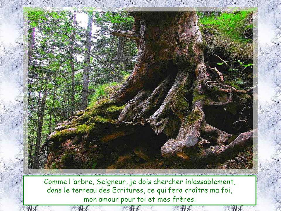 Comme l 'arbre, Seigneur, je dois chercher inlassablement,
