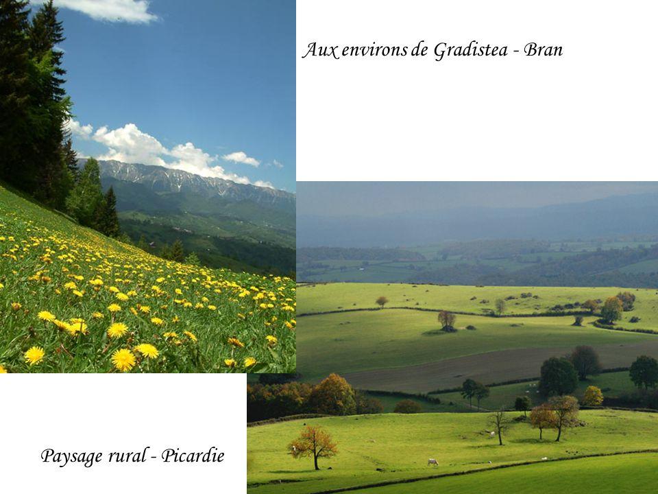 Aux environs de Gradistea - Bran