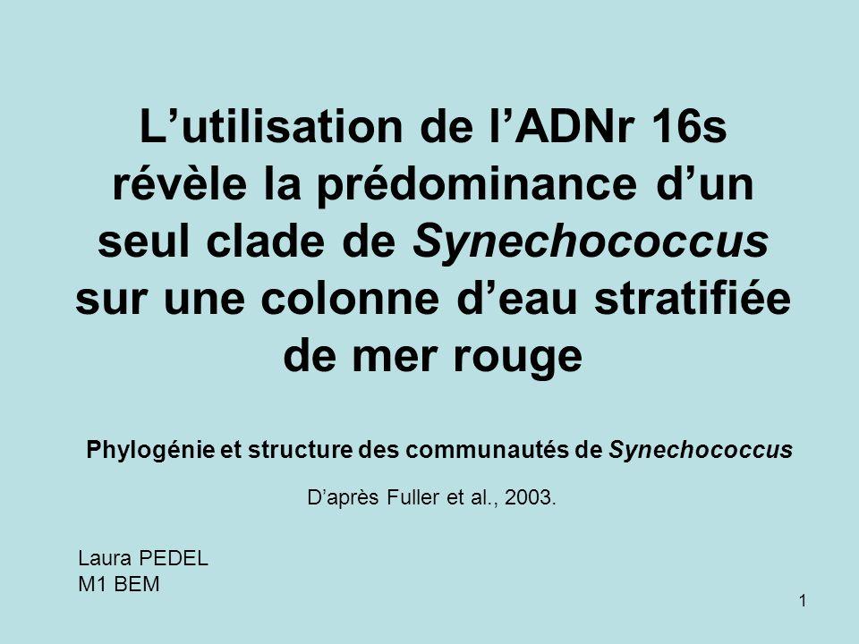 L'utilisation de l'ADNr 16s révèle la prédominance d'un seul clade de Synechococcus sur une colonne d'eau stratifiée de mer rouge