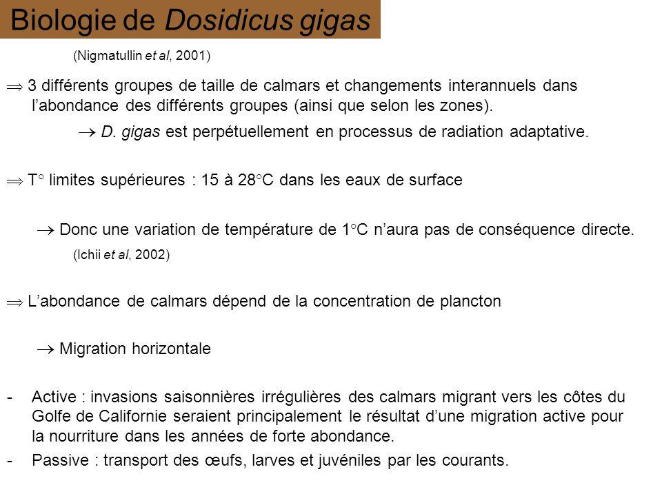 Biologie de Dosidicus gigas