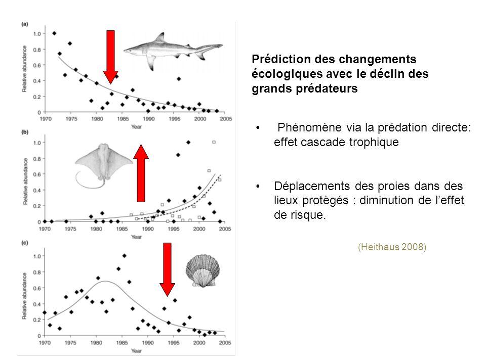 Phénomène via la prédation directe: effet cascade trophique