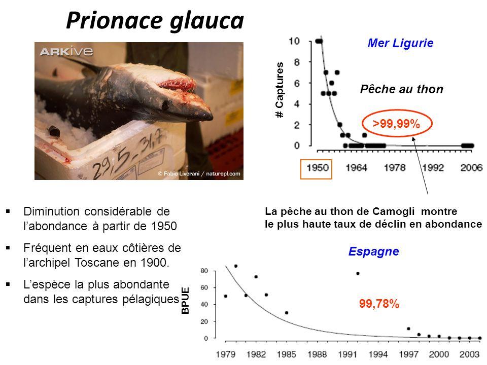 Prionace glauca Mer Ligurie Pêche au thon >99,99%