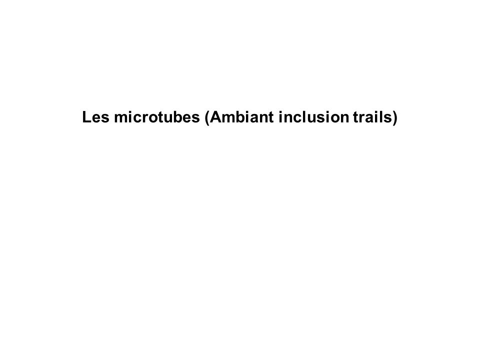 Les microtubes (Ambiant inclusion trails)