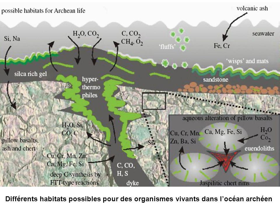 Différents habitats possibles pour des organismes vivants dans l'océan archéen
