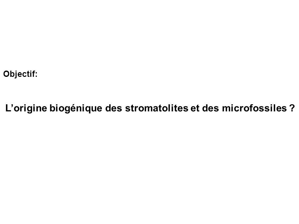 Objectif: L'origine biogénique des stromatolites et des microfossiles