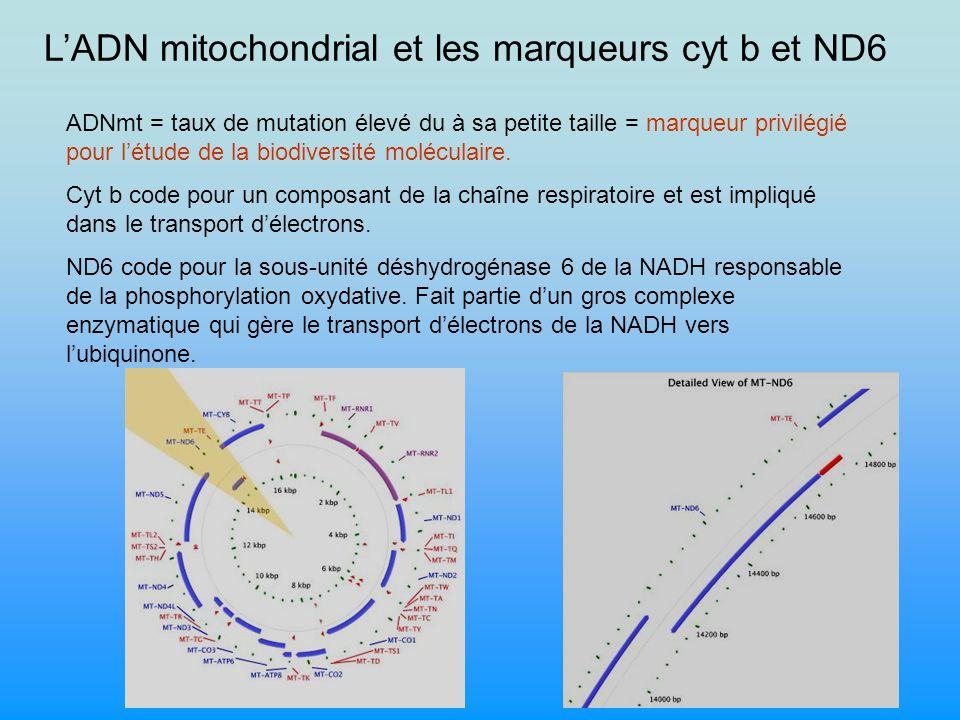 L'ADN mitochondrial et les marqueurs cyt b et ND6
