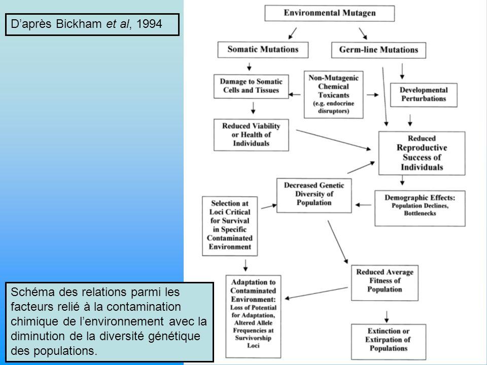 D'après Bickham et al, 1994