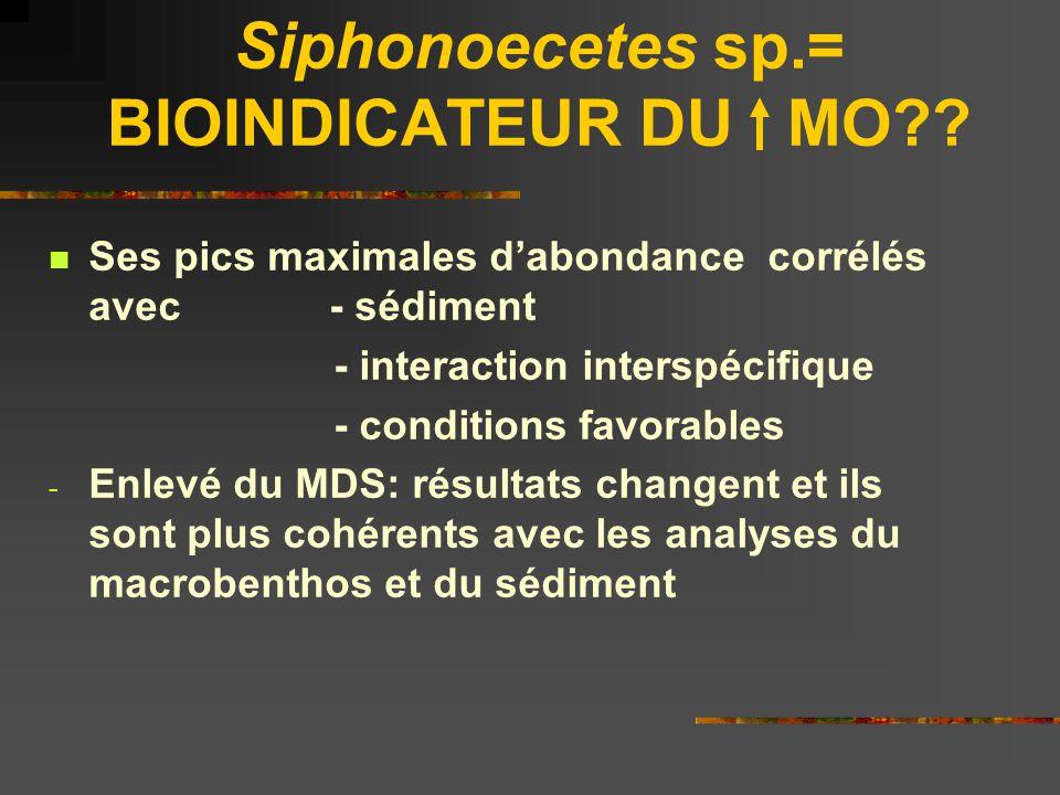 Siphonoecetes sp.= BIOINDICATEUR DU MO