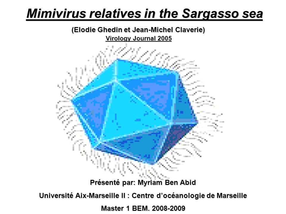 Mimivirus relatives in the Sargasso sea
