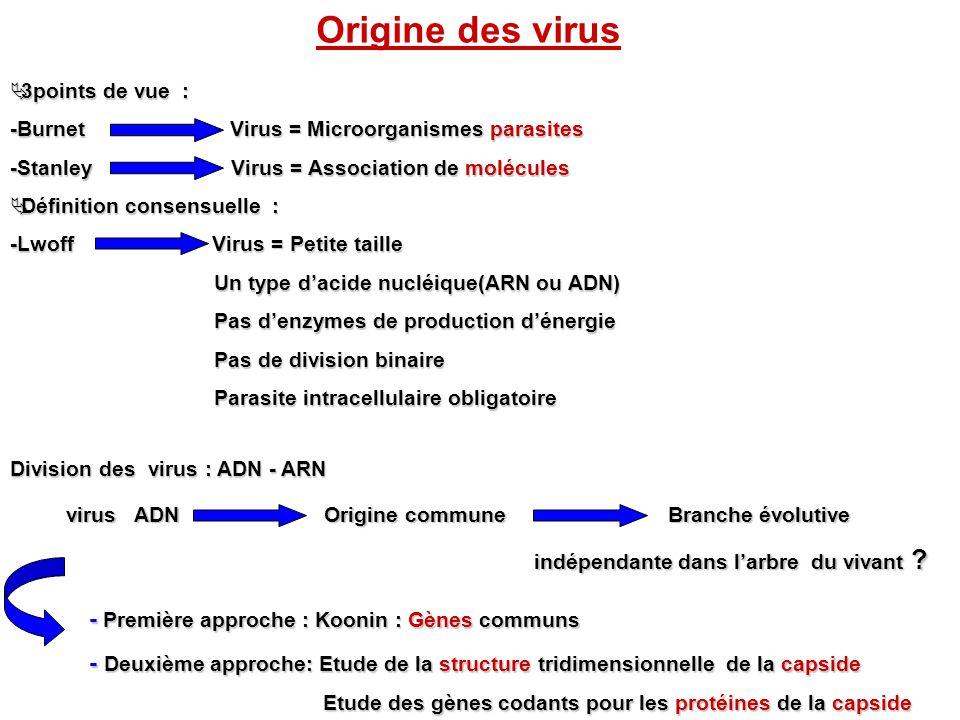 Origine des virus - Première approche : Koonin : Gènes communs