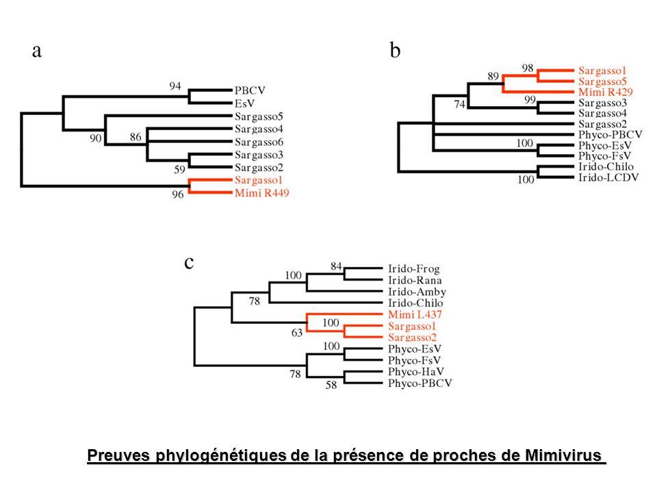 Preuves phylogénétiques de la présence de proches de Mimivirus