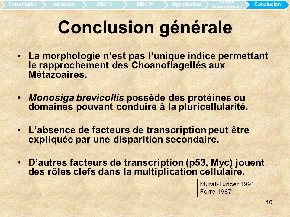 Présentation Adhésion. MEC ½. MEC 2/2. Signalisation. Gènes Homéotiques. Conclusion. Conclusion générale.