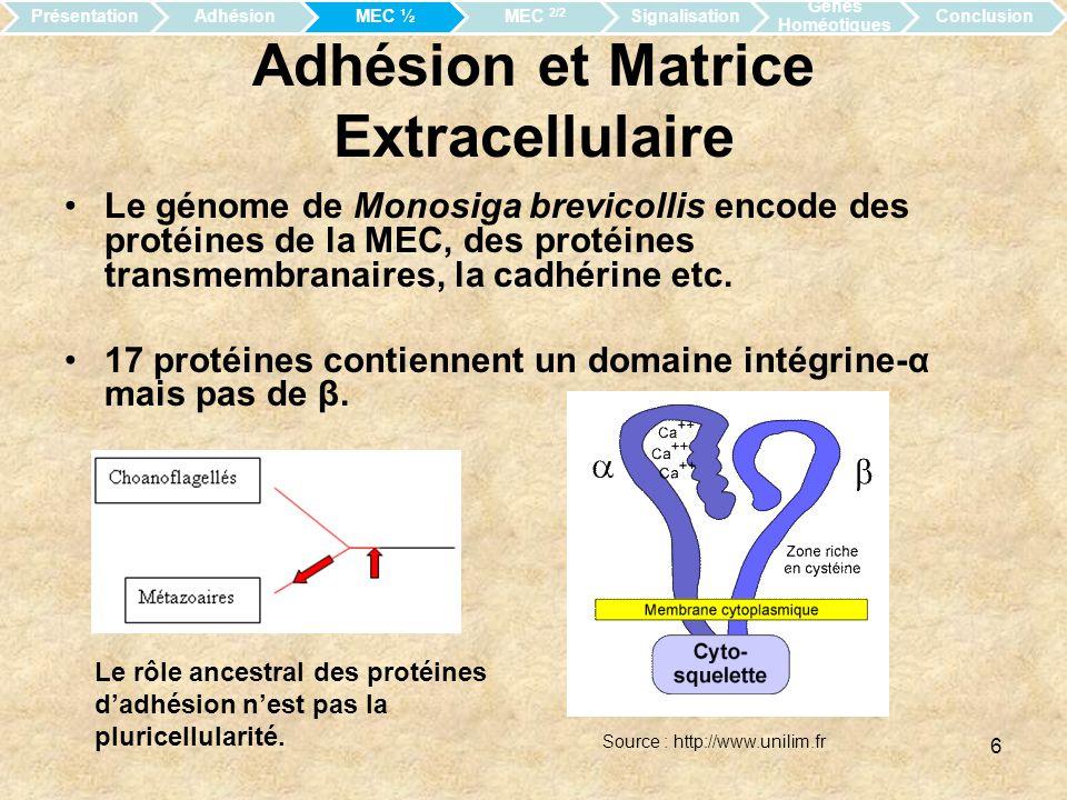 Adhésion et Matrice Extracellulaire