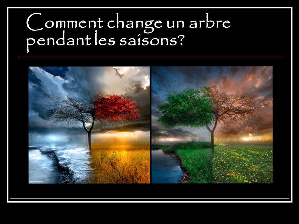 Comment change un arbre pendant les saisons