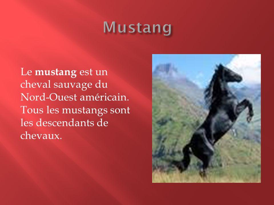 Mustang Le mustang est un cheval sauvage du Nord-Ouest américain.