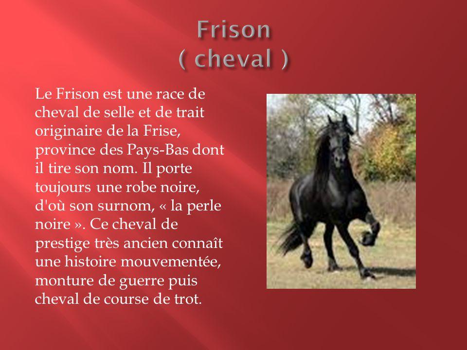 Frison ( cheval )