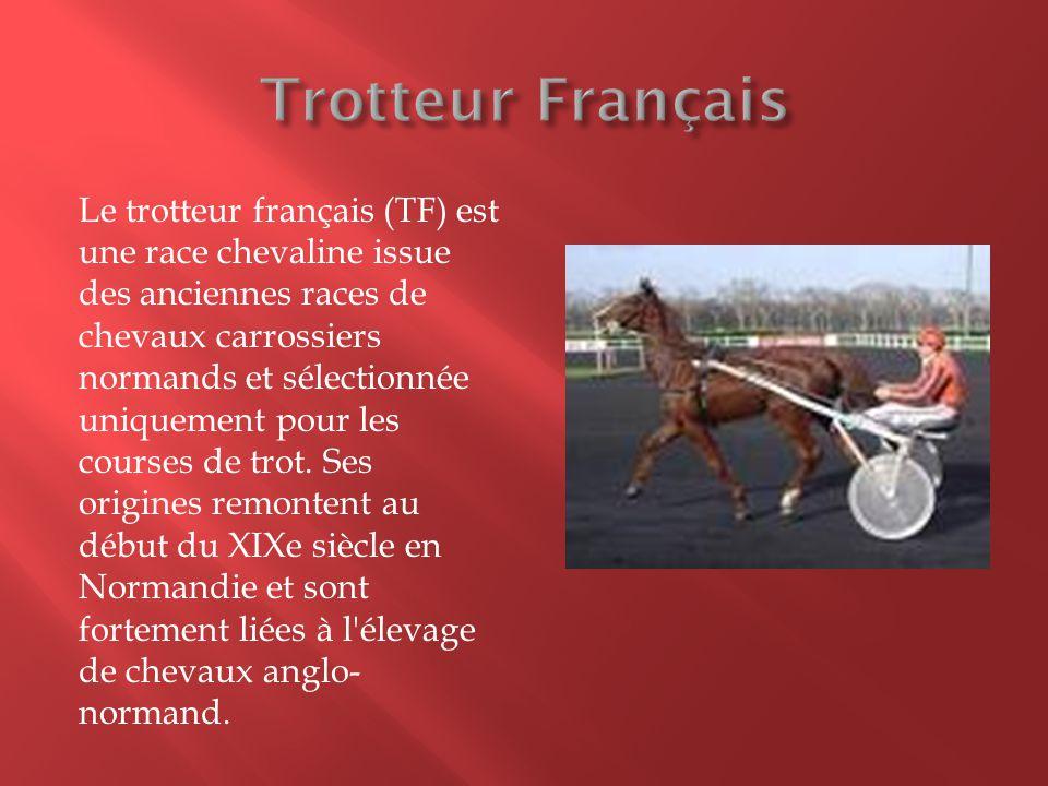 Trotteur Français