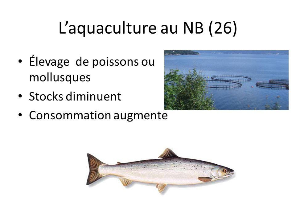 L'aquaculture au NB (26) Élevage de poissons ou mollusques