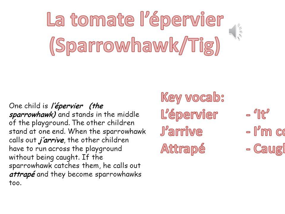 La tomate l'épervier (Sparrowhawk/Tig)
