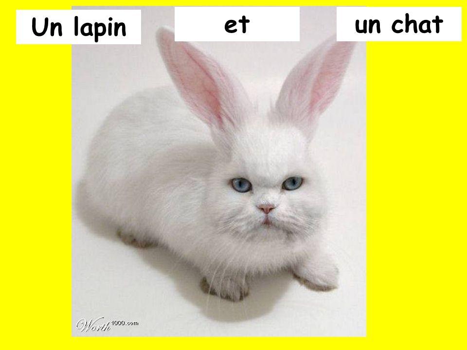 et un chat Un lapin