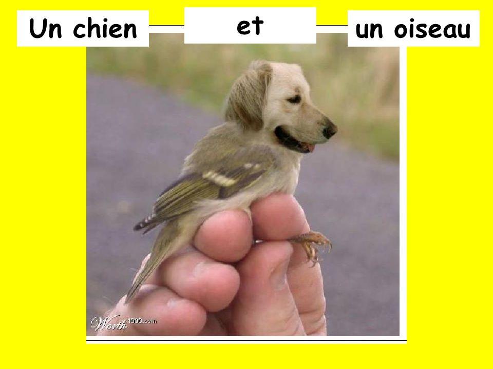 et Un chien un oiseau