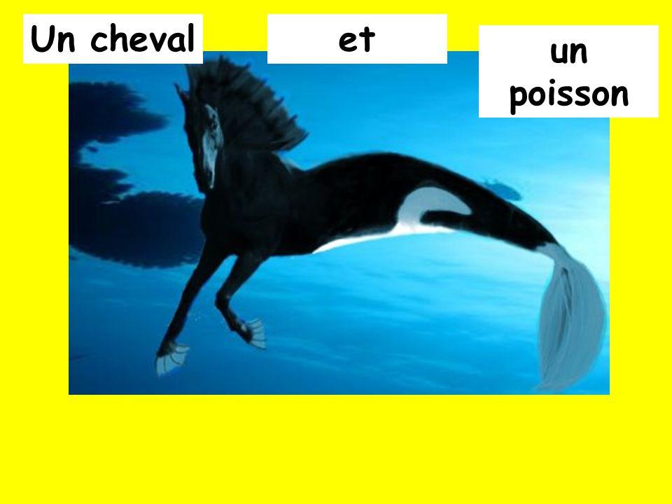 Un cheval et un poisson