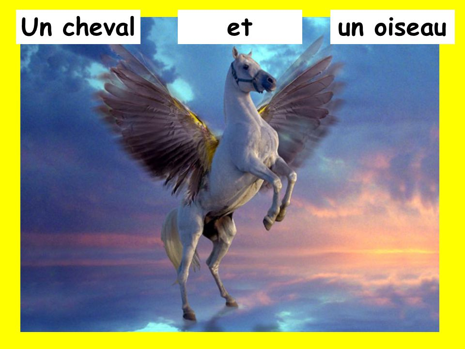 Un cheval et un oiseau
