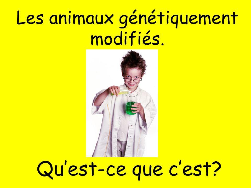 Les animaux génétiquement modifiés.