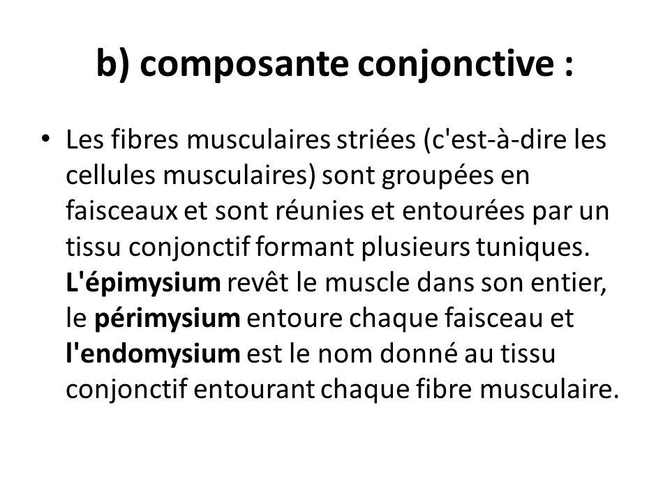 b) composante conjonctive :