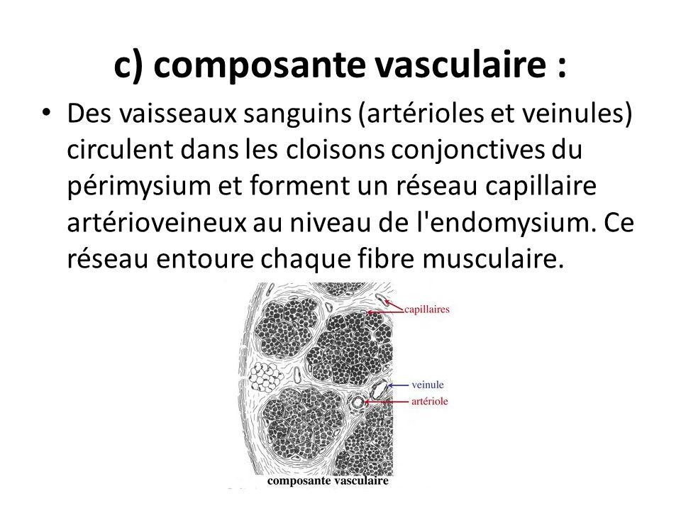 c) composante vasculaire :