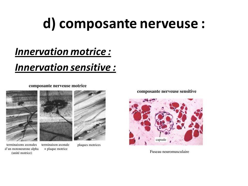 d) composante nerveuse :