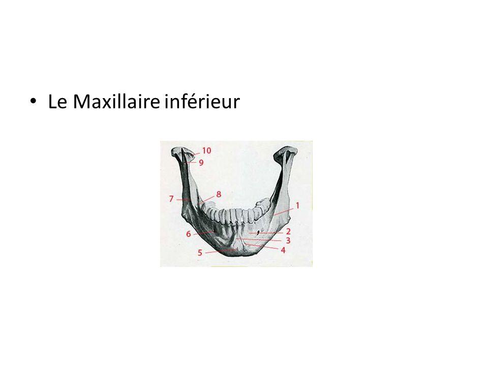 Le Maxillaire inférieur