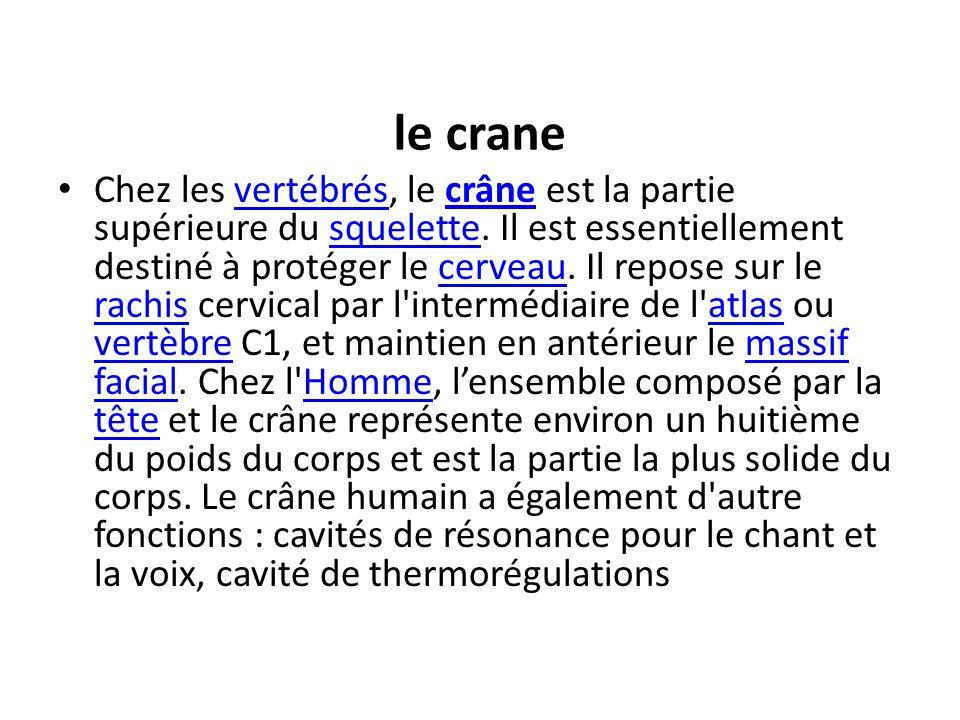 le crane