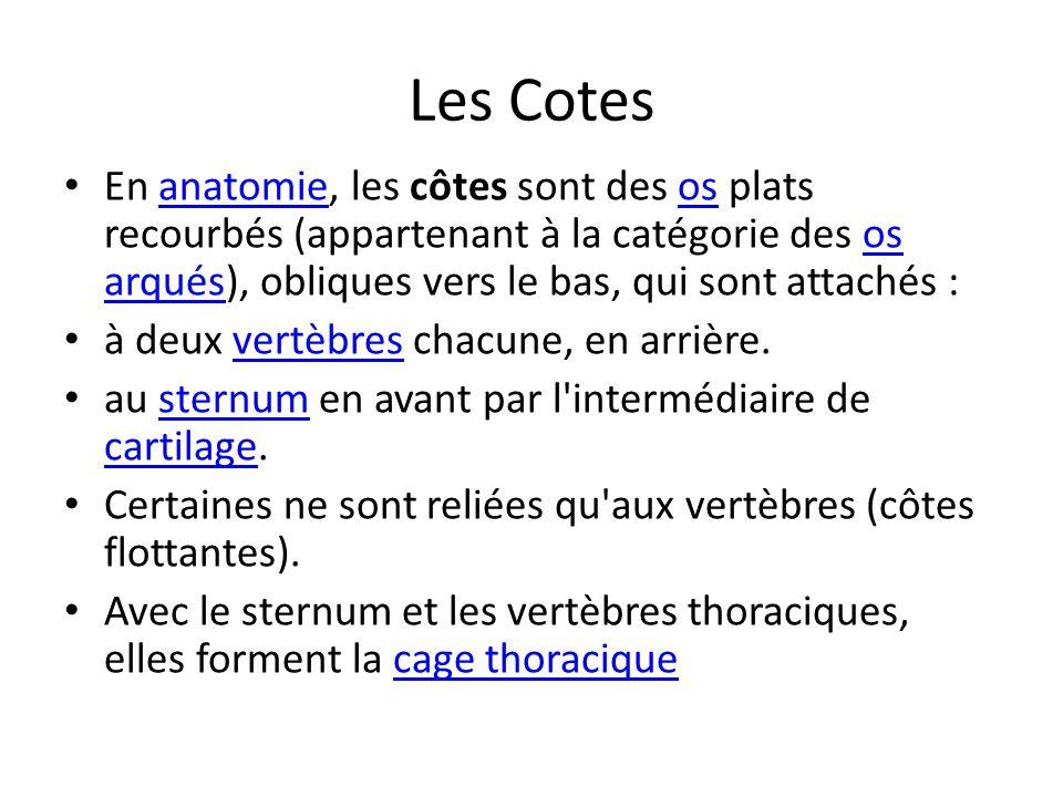 Les Cotes En anatomie, les côtes sont des os plats recourbés (appartenant à la catégorie des os arqués), obliques vers le bas, qui sont attachés :