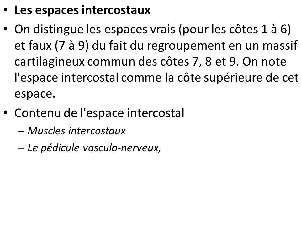 Les espaces intercostaux