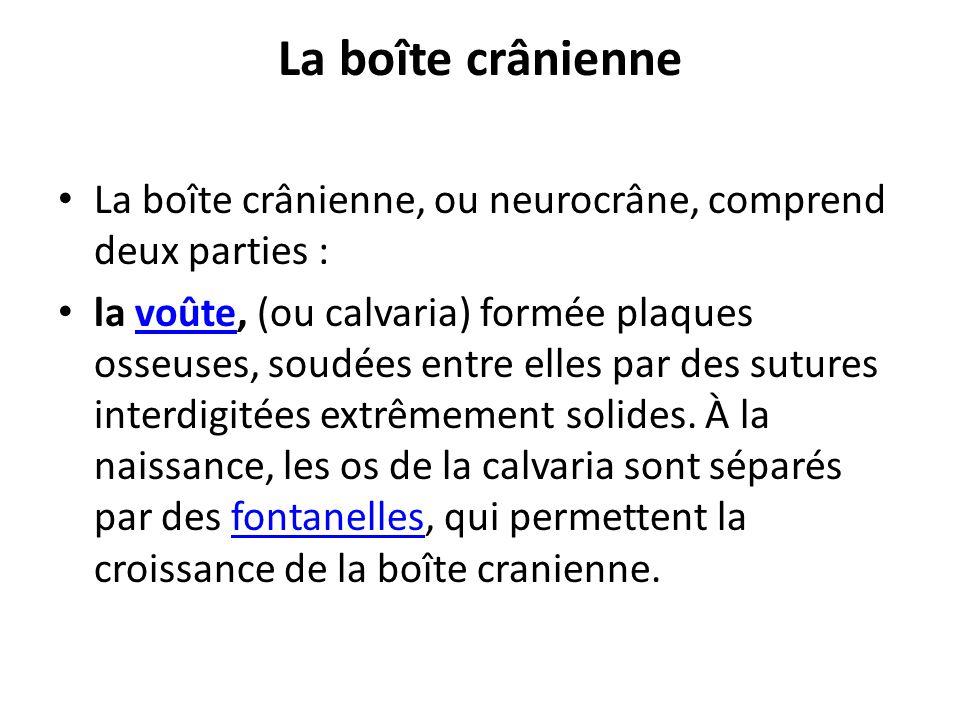 La boîte crânienne La boîte crânienne, ou neurocrâne, comprend deux parties :
