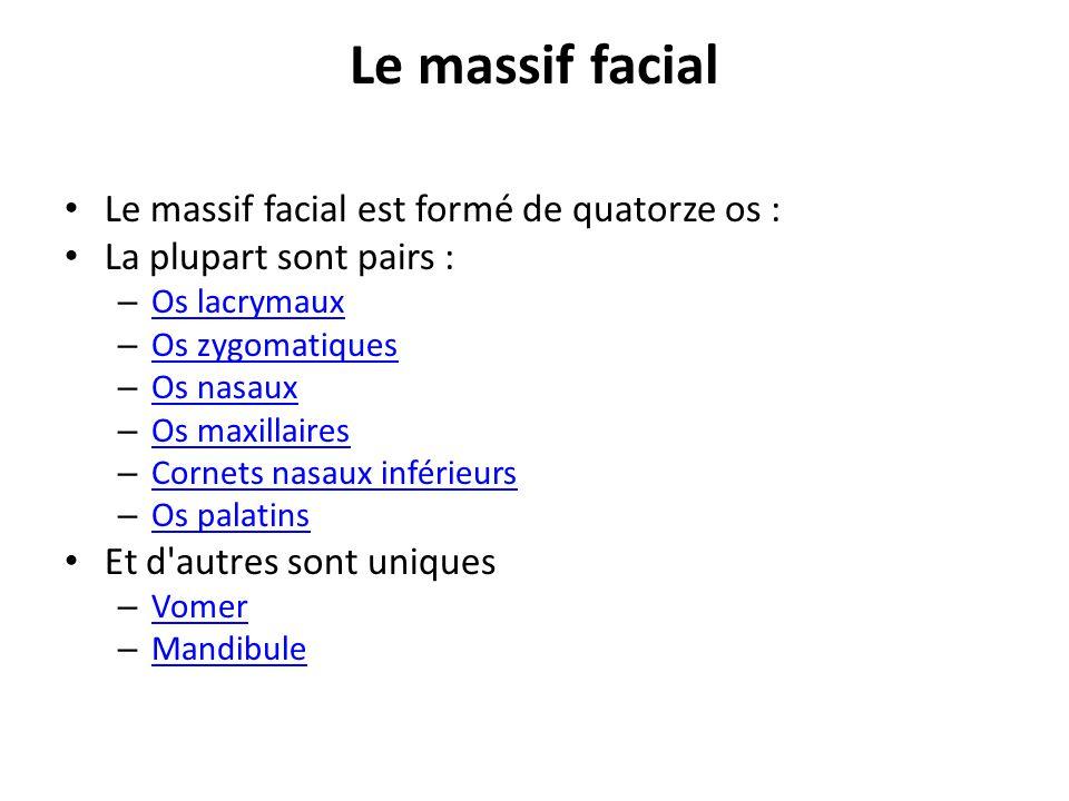 Le massif facial Le massif facial est formé de quatorze os :