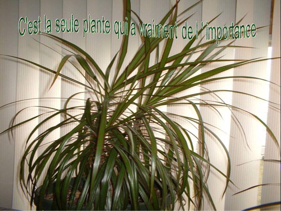 C est la seule plante qui a vraiment de l importance