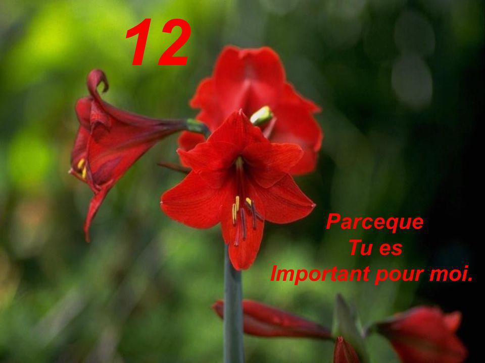 12 Parceque Tu es Important pour moi.