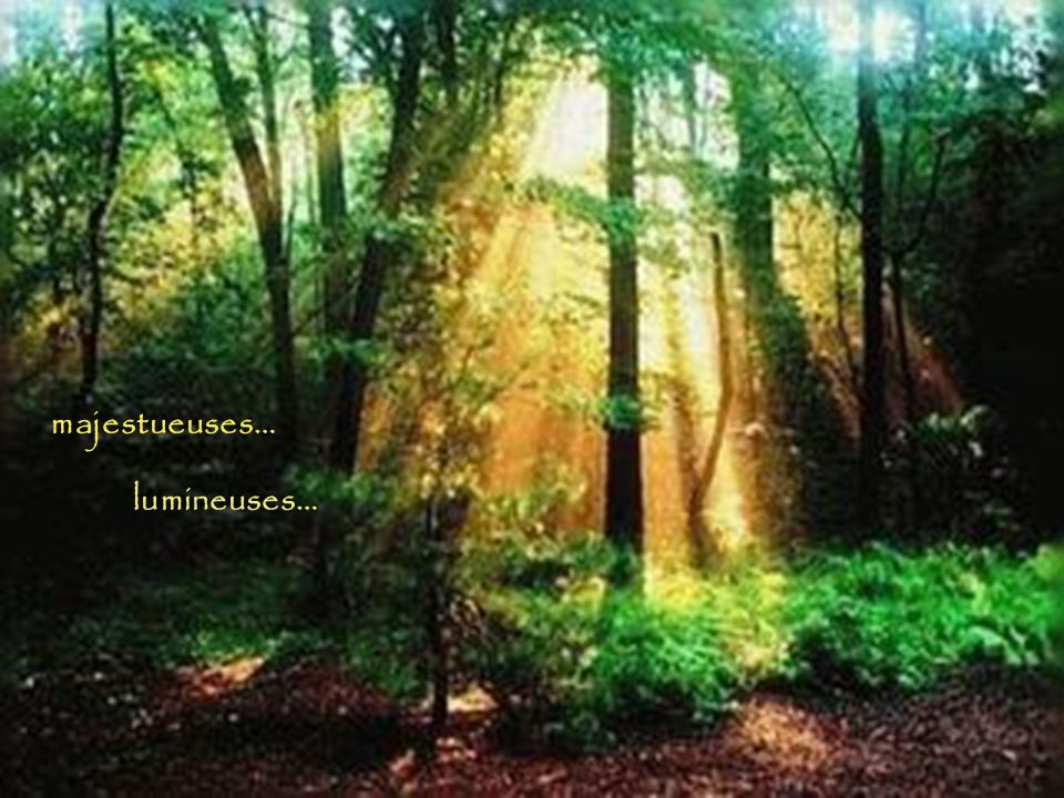 majestueuses… lumineuses…