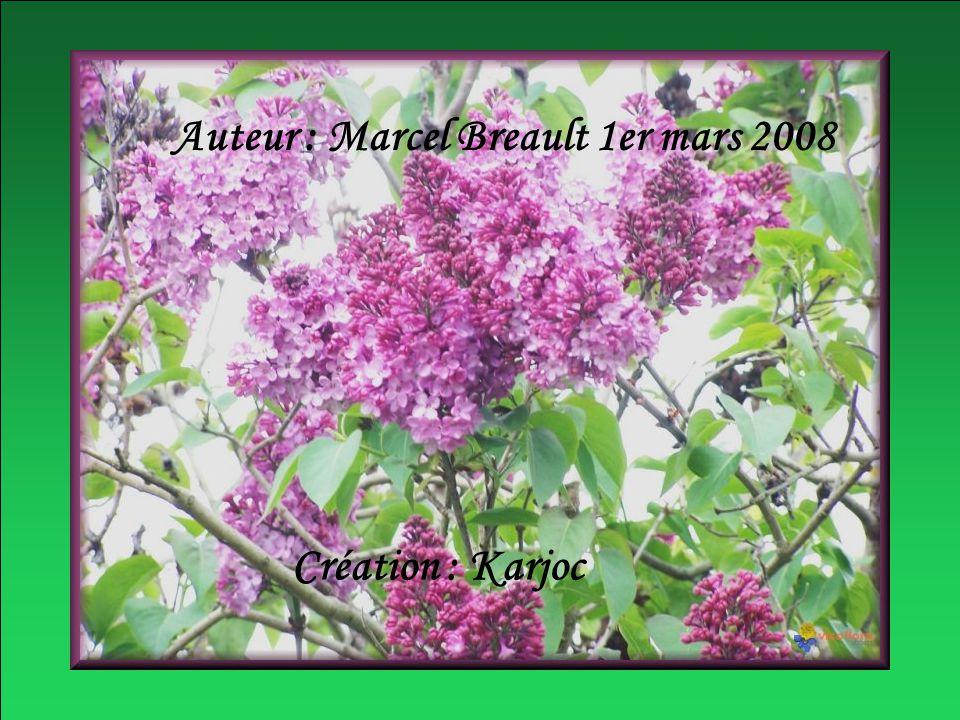 Auteur : Marcel Breault 1er mars 2008