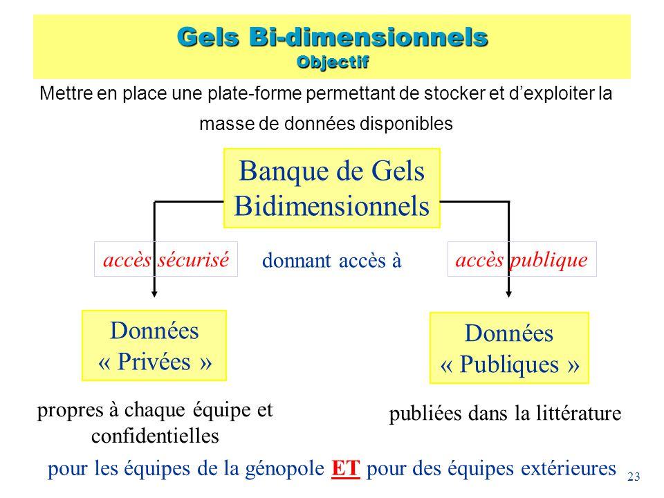 Gels Bi-dimensionnels Objectif