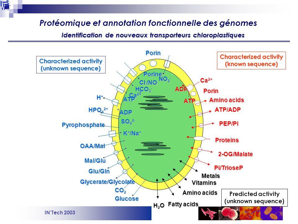 Identification de nouveaux transporteurs chloroplastiques