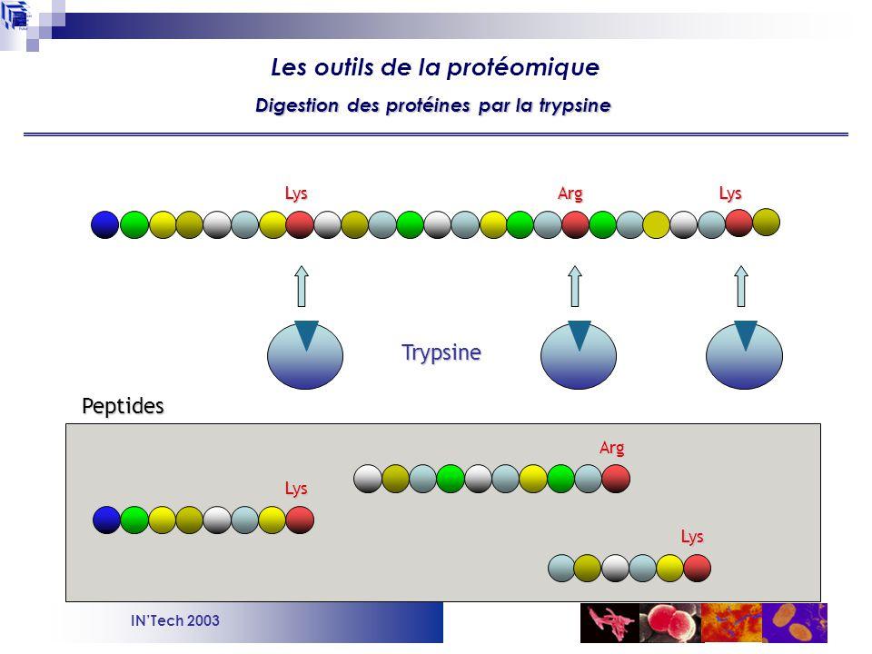 Digestion des protéines par la trypsine