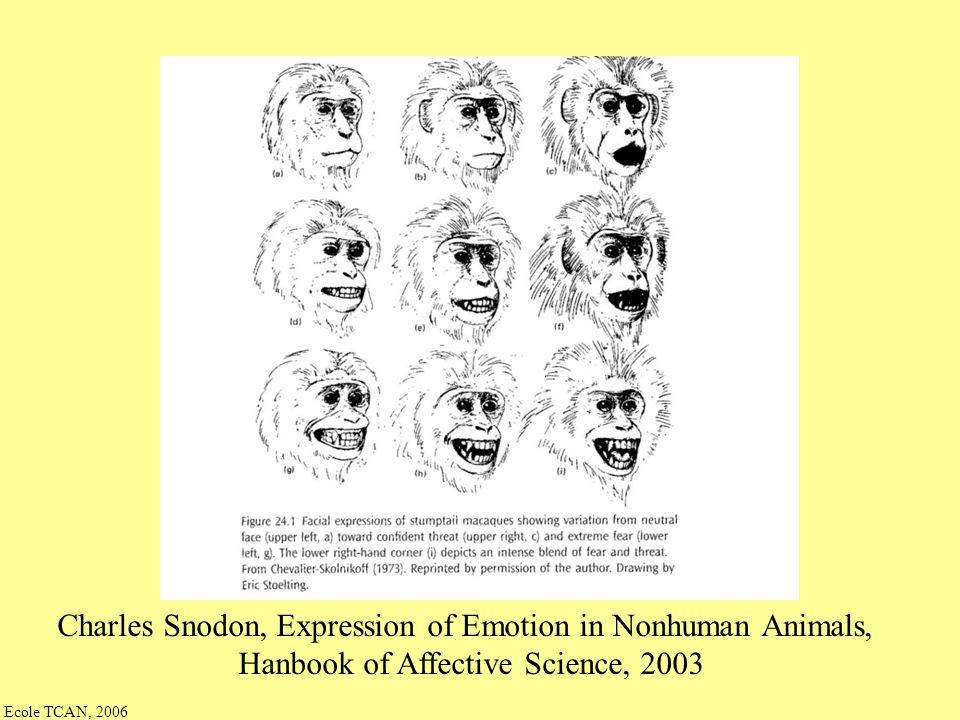 Charles Snodon, Expression of Emotion in Nonhuman Animals,