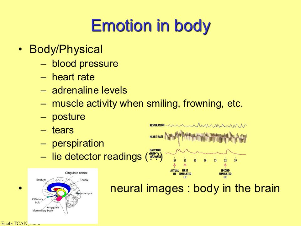 Emotion in body Body/Physical neural images : body in the brain